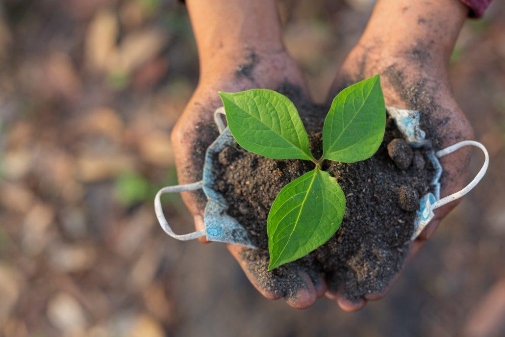 hands trees growing seedlings